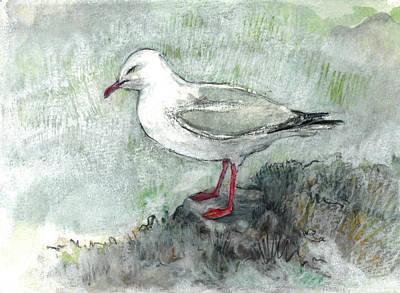 Silver Gull Art Print