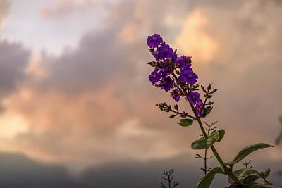 Photograph - Silver Leafed Princess Flower La Huerta Hotel Lago Calima Valle  by Adam Rainoff