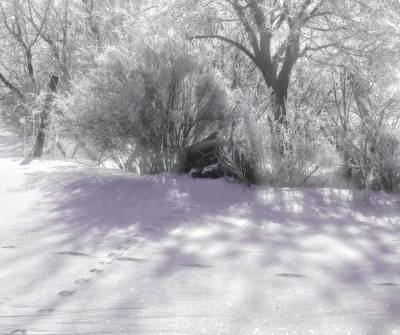 Photograph - Silver Snow by Mary Wolf