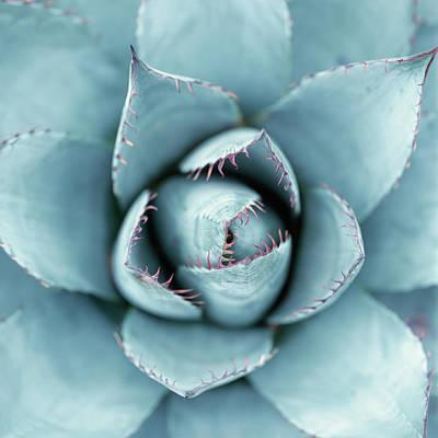 Photograph - Silver Succulent by Micha Pawlitzki