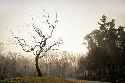 Photograph - Silver Tree On A Foggy Morning - Crystal Bridges In Bentonville Arkansas by Gregory Ballos