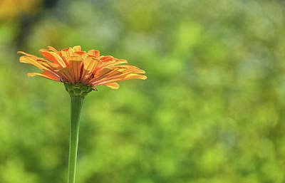 Photograph - Simply Orange by JAMART Photography