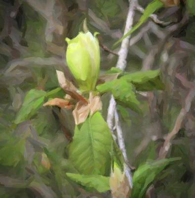 Caravaggio - Sims Creek Magnolia 11 by Cathy Lindsey