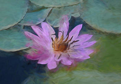 Photograph - Single Pink Water Lily by Pamela Walton