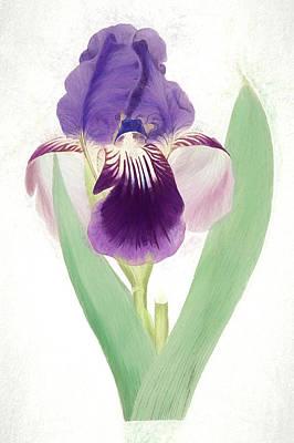 Nikki Vig Digital Art - Single Purple Bearded Iris Botanical Chalk Art by Nikki Vig
