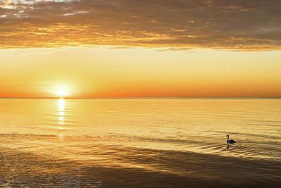 Kitchen Mark Rogan - Single Swan Sunrise - Silky Gold on Lake Ontario by Georgia Mizuleva