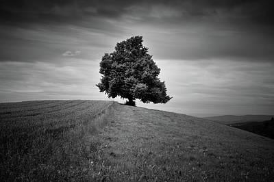 Photograph - Single Tree In Fields by Tobias Gaulke
