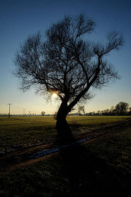 Photograph - Single Tree by Lichtfresser