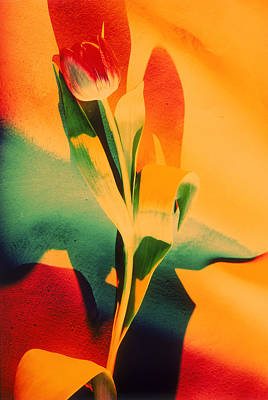 Photograph - Single Tulip by Lonnie Duka