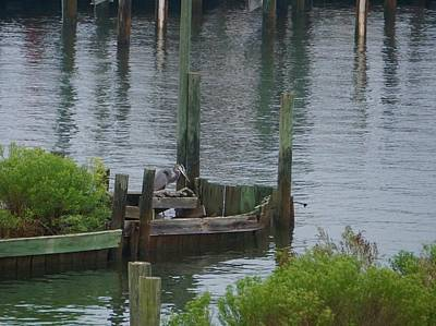 Photograph - Sitting On The Dock Of The Bay - Heron Fishing by Norma Brock