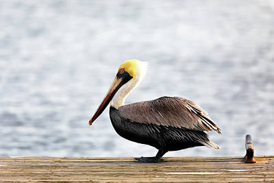 Photograph - Sitting On The Dock Of The Bay by Susan Rissi Tregoning