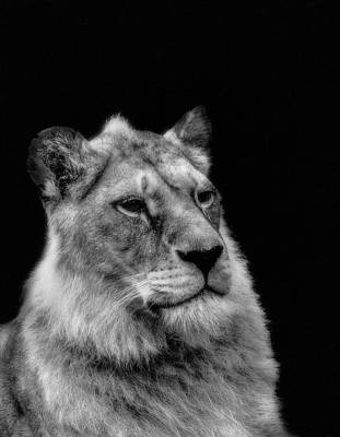 Photograph - Sitting Proud by Alan Campbell