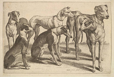 Drawing - Six Hounds by Wenceslaus Hollar
