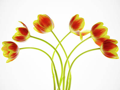 Photograph - Six Tulips by Rebecca Cozart