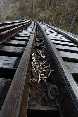 Photograph - Skeletal by David Andersen