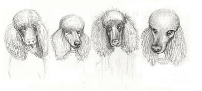 Animals Drawings - Sketch Of Four Poodles by Genevieve Esson