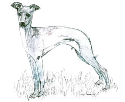 Wall Art - Drawing - My Sketch Of Italian Greyhound by Carolyn Hebert