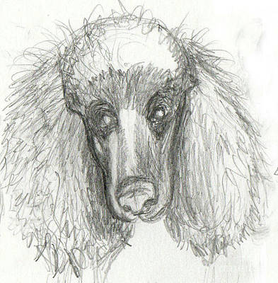 Animals Drawings - Sketch Of Zoe by Genevieve Esson