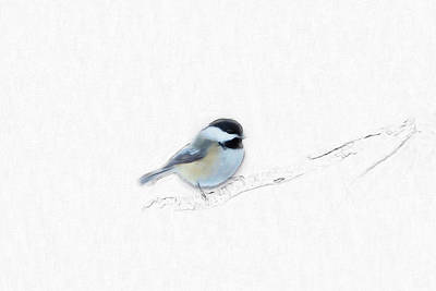 Photograph - Sketchy Chickadee by Sue Collura