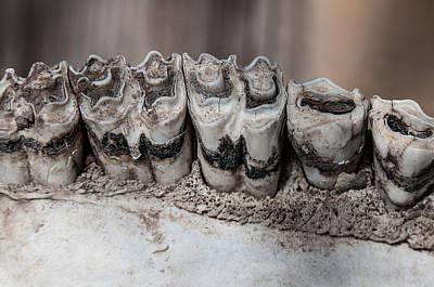 Skull Bone Teeth Original