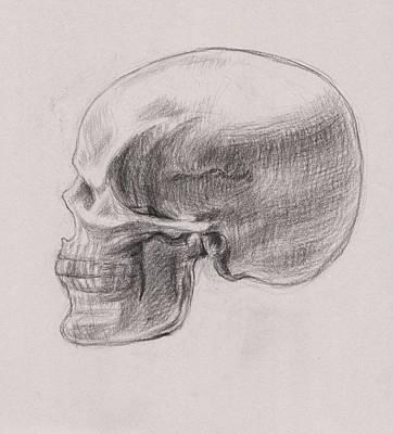 Drawing - Skull Study Profile by Irina Sztukowski