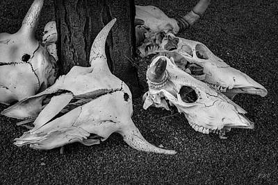 Photograph - Skulls V Bw by David Gordon