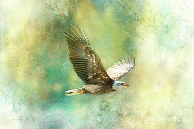 Photograph - Sky King by Beve Brown-Clark Photography