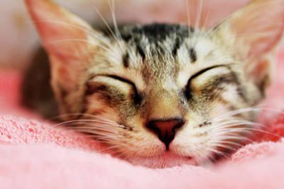 Eyes Closed Photograph - Sleeping Kitten by Joey Lim
