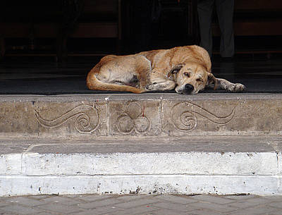 Photograph - Sleeping Street Dog At Church by Karen Zuk Rosenblatt
