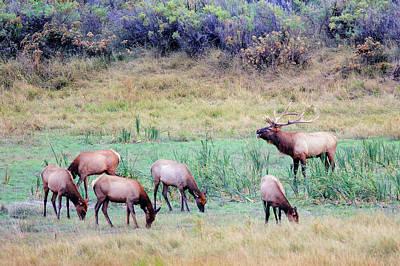 Photograph - Slippery Ann Elk by Todd Klassy