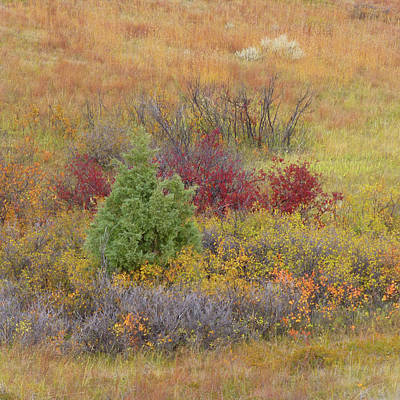 Photograph - Slope County Autumn Bounty by Cris Fulton