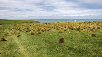 Photograph - Slope Point New Zealand by Joan Carroll