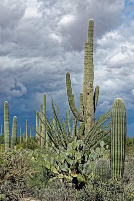 Photograph - Slow Pokes - Sonoran Desert by KJ Swan