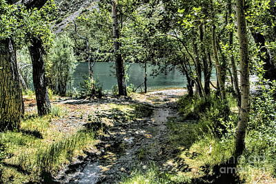 Photograph - Small Creek  by Joe Lach