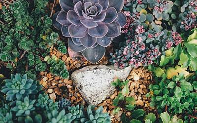 Photograph - Small Succulent Garden by Top Wallpapers