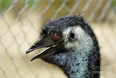 Photograph - Smiley Face Emu by Kaye Menner