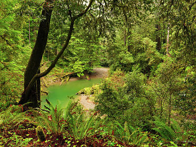 Photograph - Smith River Redwoods by Leland D Howard