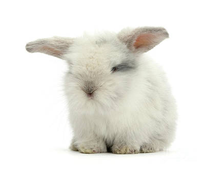 Photograph - Smoky Love Bunny by Warren Photographic