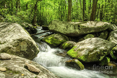 Photograph - Smoky Mountains In Spring by Mel Steinhauer