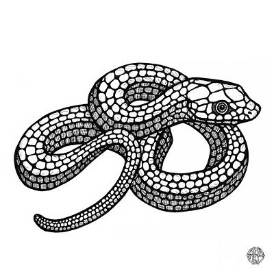 Drawing - Smooth Green Snake by Amy E Fraser