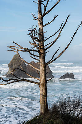 Photograph - Snag And Seastacks by Robert Potts