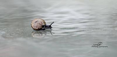 Blue Hues - Snail by Lynn Phelps