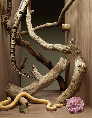Piggy Bank Wall Art - Photograph - Snakes Going Toward A Piggy Bank by Michael Blann