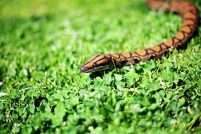 Photograph - Snakey by By John Carleton