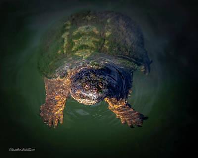 Photograph - Snapping Turtle by LeeAnn McLaneGoetz McLaneGoetzStudioLLCcom