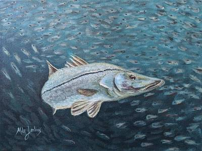 Painting - Snook Feeding by Mike Jenkins