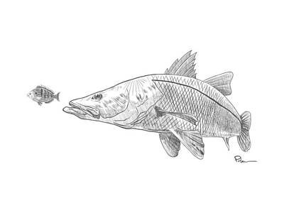 Drawing - Snook On The Hunt by Kevin Putman