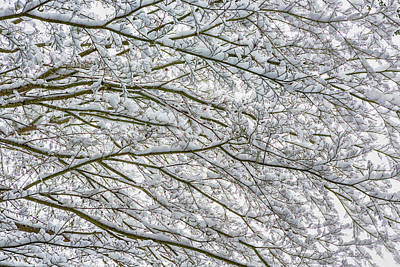 Photograph - Snow And Branches, No. 2 - Nature Abstract by Belinda Greb