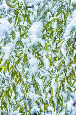 Photograph - Snow And Leaves - Nature Abstract by Belinda Greb