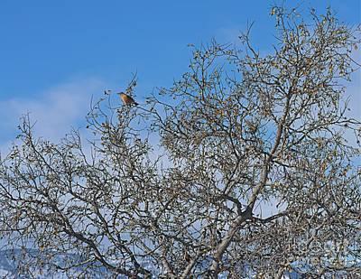 Photograph - Snow Bird by Jon Burch Photography